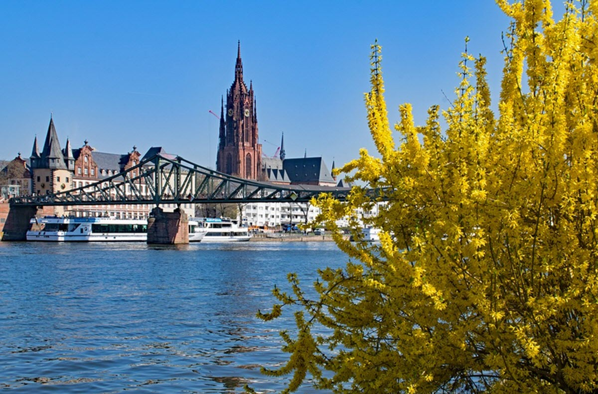 Forsythia i frankfurt