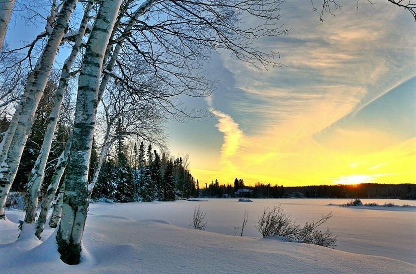 Björk träd på vintern