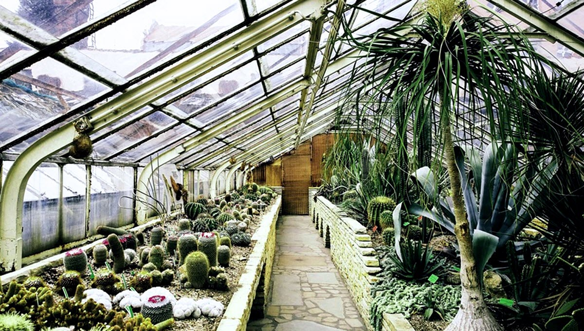 växthus fyllt md kaktusar och sukkulenter